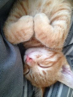Our cute little ginger cat -gingy.