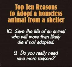 Same top 10 reasons why we need a spay/neuter program to reduce the euthanasia rate