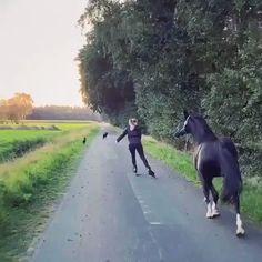 Funny Horse Videos, Funny Horses, Cute Horses, Horse Love, Funny Animal Videos, Cute Funny Animals, Beautiful Horses, Animals Beautiful, How To Ride A Horse