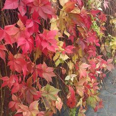 Autumn. Lovely Autumn, Plants, Painting, Instagram, Art, Art Background, Fall Season, Painting Art, Kunst