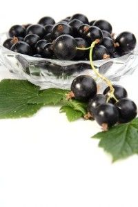 Growing Cold-Hardy Currants
