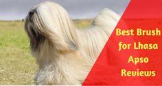 Dog Grooming Tips, Best Brushes, Lhasa Apso, Dog Boarding, Dog Coats, Best Dogs, Dog Breeds, Dog Daycare, Coats For Dogs