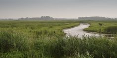 The marsh at Long Point Provincial Park is one of the five reasons why your next road trip should be along Lake Erie's north shore if you live near there. Landscape Photography, Nature Photography, Travel Photography, Dreamland, Ontario Travel, Nature Adventure, Lake Erie, Parcs, Outdoor Camping
