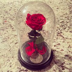 The Eternal Rose is a real red preserved rose that will last up to one year, without water! For custom colors, please send us a message on the contact…