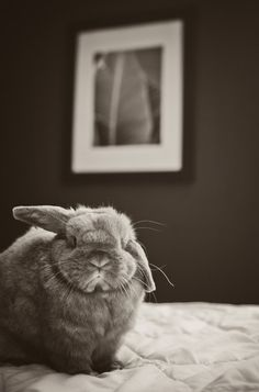 Black and White Photo of Bunny