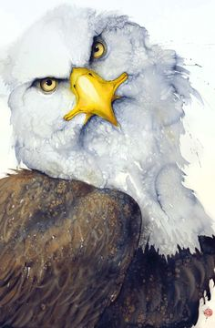 Karl Martens, Bald Eagle | Cricket Fine Art