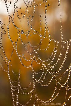 Web with Dew Drops   © Amy Jackson