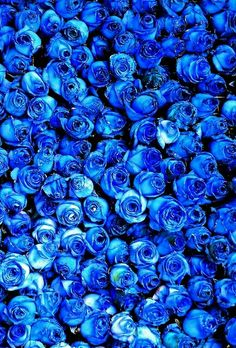 Ideas Flowers Blue Rose Colour For 2019 Blue Aesthetic Pastel, Aesthetic Colors, Wallpaper Rose, Everything Is Blue, Blue Wallpapers, Love Blue, Color Blue, Blue Walls, Something Blue