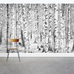 Wallums Wall Decor Snow Covered Birch Tree x 3 Piece Wall Mural Birch Tree Mural, Birch Tree Wallpaper, Tree Wall Murals, Grey Wallpaper, Wallpaper Roll, Peel And Stick Wallpaper, Birch Trees, Wallpaper Removal Solution, Smooth Walls