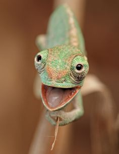 Reptiles can be cute too! Check out the 21 adorable reptiles in these photos. Smiling Animals, Happy Animals, Funny Animals, Cute Animals, Zoo Animals, Les Reptiles, Reptiles And Amphibians, Beautiful Creatures, Animals Beautiful
