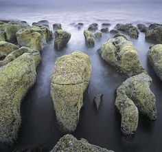 Bone Yard Square, Cove Bay, Moray, Scotland, low tide, barnacle, rocks, melt, sculpted, tides, vertebrae, rough, surreal photo