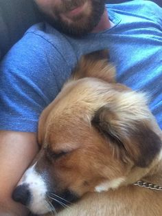 Chris Evans and Dodger.  I'd love to be snuggled w these guys!!