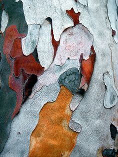 "[Textura Paper Bark by Syman Kaye Shot in Spain in This is a detail of the bark from a ""Paper Bark Tree"" Patterns In Nature, Textures Patterns, Color Patterns, Nature Pattern, Art Grunge, Foto Macro, Theme Nature, Pattern Texture, Texture Design"