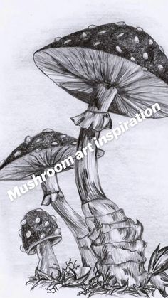 Fairy Drawings, Cool Art Drawings, Realistic Drawings, Art Drawings Sketches, Pencil Drawings, Drawings Of Animals, Tree Drawings, Unique Drawings, Ink Illustrations