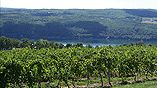 Bully Hill Vineyards, Hammondsport, NY