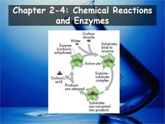 Biology - Chemical Reactions and Enzymes PPT and Guided Notes) Biology Textbook, Biology Teacher, Daily Objectives, High School Biology, Fitness Activity Tracker, Chemical Reactions, Dna Test, No Equipment Workout, Teacher Stuff