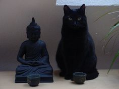meditate on kitteh