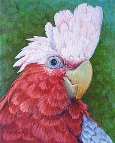 Galah Cockatoo by Tim Marsh Galah Cockatoo, Australian Parrots, Nature Artists, Funny Birds, Watercolor Animals, Watercolour, Bird Illustration, Bird Drawings, Pictures To Paint