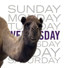Guess what day it is? Woot woot!