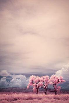 Cream + grey + pink + dusty blue + dark brown