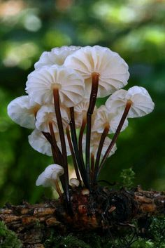 Graceful mushrooms