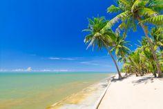 Таиланд Тропики Побережье Пейзаж Небо Пальмы Пляж Phuket Природа