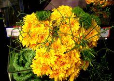 Feria Essen. Plants flowers  http://elinvernaderodenaan.es/archivos/1013