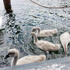 swans - Doo it - just doo it