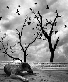 Animal Kingdom, Elephant, Photography, Animals, Photograph, Animaux, Photography Business, Photoshoot, Animal