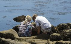 Tide Pooling in Pacific Grove