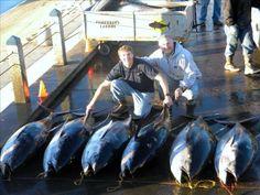 ecd98773d9f31 Yellowfin Tuna Yellowfin tuna caught in Mexico off the Royal Polaris  fishing boat