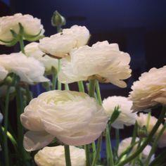 Ranúnculos brancos. Very beautiful!