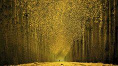 Beautiful Autumn Trees HD Wallpaper