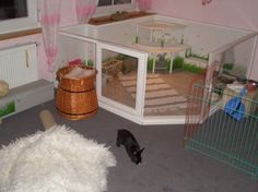 indoor rabbit enclosure ideas - Google Search
