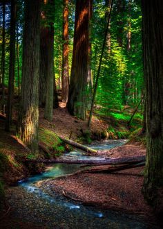 I grew up in a redwood forest