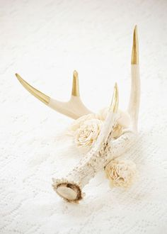 Gold tip deer antlers...I'm going to do this with some of the antlers my husband has laying around...such a cool idea!