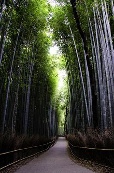 Bamboo Forest of Arashiyama | Flickr - Photo Sharing!