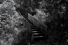 https://flic.kr/p/JqMf8L | The Stairway | A nature stairway that is off of the paint creek trail.  Hope everyone has a great weekend!
