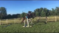 The biggest we have jumped together :) easy for him and he makes me feel so confident! (About 3'3/6 I think)