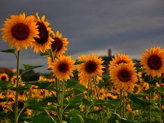 BANCO DE IMAGENES GRATIS: 12 fotos de flores preciosas en varios colores para compartir...