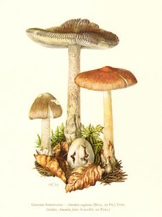 1962 Grisette Mushroom Vintage Offset by CabinetOfTreasures, via Etsy.
