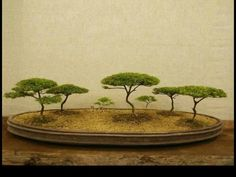 The ancient Japanese art of Bonsai creates a miniature version of a fully grown tree through careful potting, pruning and training. Even if youre not zen enough to labour over your own Bonsai,. - Gardening Worlds Ficus Bonsai, Bonsai Garden, Bonsai Pruning, Succulents Garden, Unique Trees, Small Trees, Ikebana, Mini Plantas, Bonsai Forest
