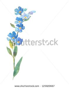 Forget Me Not Flower by Zhanna Smolyar, via Shutterstock