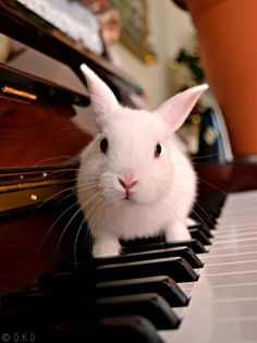 There's s bunny on the piano!