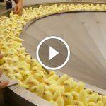 Vidéo qui a fuité: Les choses horribles qui se font dans l'industrie de la viande!