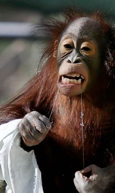 we are not your monkeys We use cookies to enhance your experience on our website this website   monkeys have it tough in the english language generally speaking, being called  a monkey (or invoking one) does not bode well while silliness is.