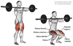 Barbell front squat. A major compound exercise that's easier on the lower back than the barbell squat. Must hold barbell properly, unlike illustration (sorry!). Target muscle: Quadriceps (Vastus Lateralis, Vastus Intermedius, Vastus Medialis, and Rectus Femoris). Synergists: Gluteus Maximus, Adductor Magnus, and Soleus. Dynamic stabilizers (not highlighted): Hamstrings and Gastrocnemius.