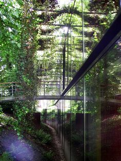Where a building ends and nature begins; Herzog & DeMeuron's Ricola Marketing Building, taken in Basel Switzerland 2004