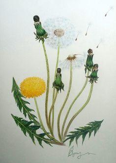 Single Flowers, Dandelion Flower, Dandelions, Daffodils, Daisies, Watercolors, Silhouettes, Weed, Bullet Journal