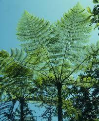 foresta amazzonica piante - Cerca con Google
